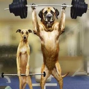 dog_lifting_weights_-_popoever